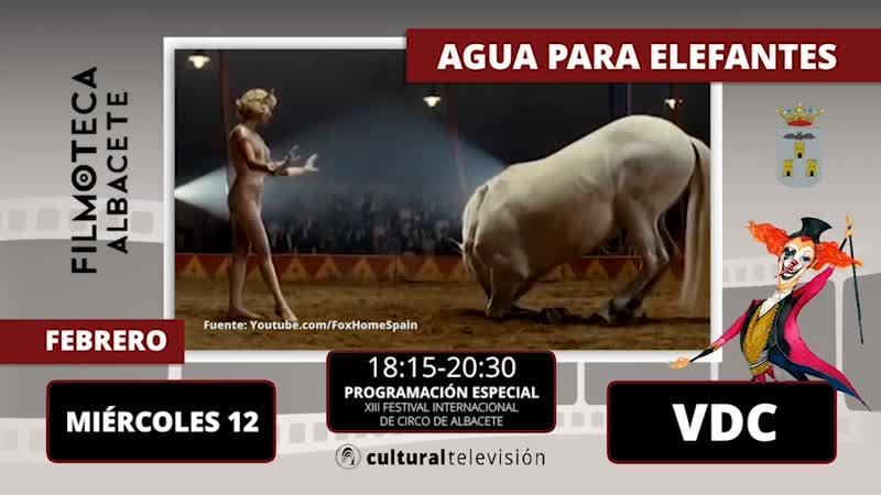 AGUA PARA ELEFANTES | XIII FESTIVAL INTERNACIONAL DE CIRCO DE ALBACETE